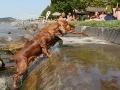 nyári vakáció kutyákkal (1)