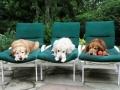 nyári vakáció kutyákkal (7)