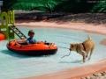nyári vakáció kutyákkal (8)