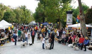 EB OVO Piknik, a felelős kutyatartók közösségének szervezése