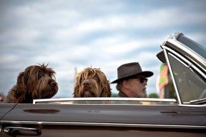 Az idősek életében fontos szerepet tölthet be a kutya