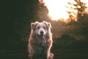 A kutyával való kapcsolat hatással van az életminőségre