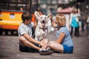 A felelős kutyatartás közös ügyünk!