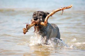 Egy boldog strandoló