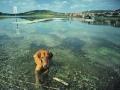 nyári vakáció kutyákkal (3)